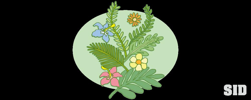 南国系の草花の手描きイラスト 無料配布 南国イラスト Ai Epsイラレ素材 ダウンロードページ