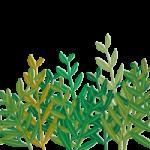 元気に育った緑々しい草のイラスト