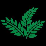 シダ系植物のような葉っぱのイラスト