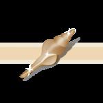 ナガニシと呼ばれ細長い巻き貝のイラスト