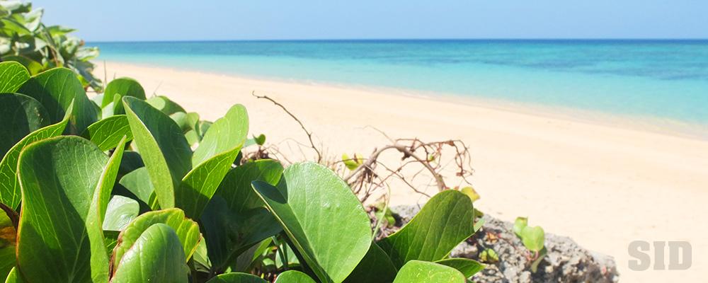 石垣島の海と緑