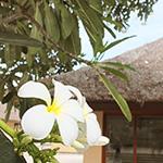 プルメリアの花と南国の建物